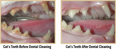 pet dental services in Ontario