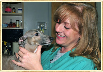 Pet Dental Care in Hicksville, Nassau County