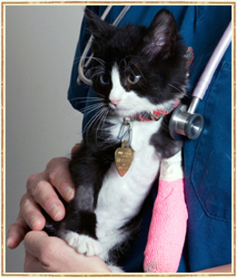 hicksville pet emergencies, nassau county