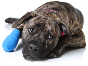 pet surgery anesthesia in hicksville