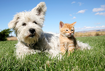 hicksville, long island summer pet care information